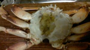 Crab 15