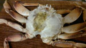 Crab 16