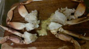 Crab 20