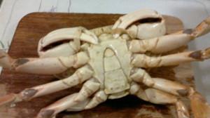 Crab 9