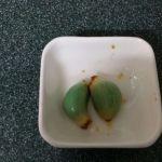 臘八蒜 6