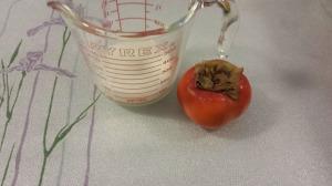 柿子布甸 1